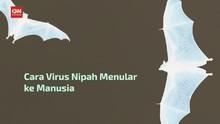 VIDEO: Sumber Penularan Virus Nipah
