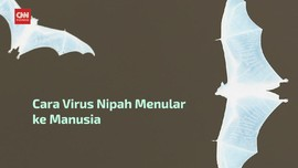 VIDEO: Sumber Penularan Virus Nipah