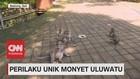 VIDEO: Perilaku Unik Monyet Uluwatu