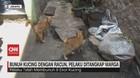 VIDEO: Bunuh Kucing dengan Racun, Pelaku Ditangkap Warga