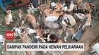 VIDEO: Dampak Pandemi pada Hewan Peliharaan