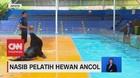 VIDEO: Nasib Pelatih Hewan Ancol