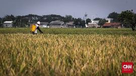 BPS Catat Sektor Pertanian Tumbuh 2,59% di Kuartal IV 2020
