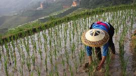 PDB Pertanian Tumbuh di Q IV 2020, Kementan Apresiasi Petani