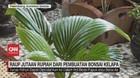 VIDEO: Raup Jutaan Rupiah dari Pembuatan Bonsai Kelapa