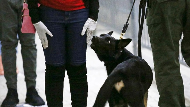 Miami Heat mendatangkan bantuan untuk melacak corona di arena pertandingan dengan bantuan anjing.