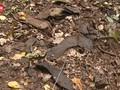 VIDEO: Sekretaris Kamp Nazi Dituduh Membunuh 10 Ribu Orang