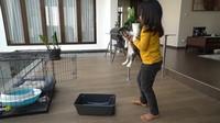 <p>Tak hanya itu, Hengky juga memiliki kolam besar di rumahnya nih, Bunda. Dikelilingi dengan lantai kayu, Hengky bisa meletakkan kandang kucing di dekat kolam. (Foto: youtube HK Family)</p>