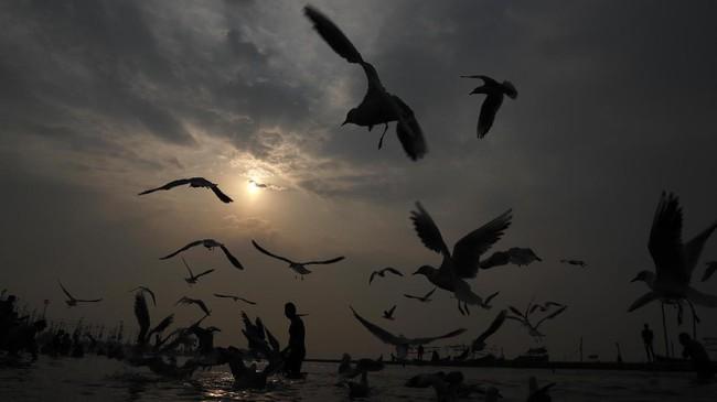 Magh Mela atau Magha Mela merupakan ritual penebusan dosa bagi umat Hindu di India dengan mandi di Sungai Sangam, Prayagraj, India.