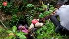 VIDEO: Terjebak 25 Jam Dalam Goa, Pria Tua Selamat