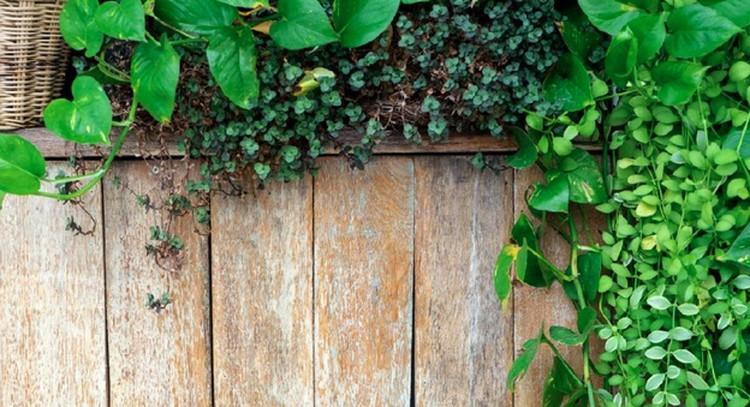 Apakah Bunda memerlukan tanaman hias pagar agar rumah minimalis terlihat lebih asri? Berikut pilihan tanaman hias pagar yang cocok untuk rumah minimalis.