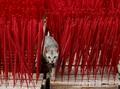 FOTO: Geliat Perajin Hio Jelang Perayaan Imlek