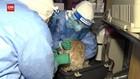 VIDEO: Korsel Mulai Tes Covid-19 Untuk Anjing