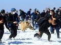 FOTO: Warga Panik Dikejar Beruang Saat Dilepas ke Alam Liar