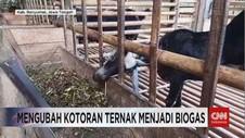 VIDEO: Mengubah Kotoran Ternak Menjadi Biogas