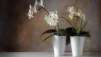5 Ide Dekorasi Rumah dengan Tanaman Hias