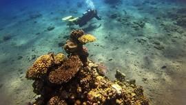 FOTO: Laut Merah yang Kian Sepi Penghuni