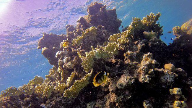 Eksistensi terumbu karang di Laut Merah sedang terancam dengan rencana pengoperasian pipa minyak antara Uni Emirat Arab dan Israel.