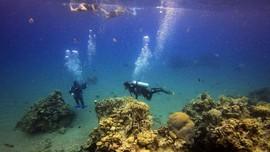 Filipina Sita Cangkang Kerang Raksasa Ilegal Rp363 Miliar