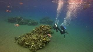 Penyelaman Virtual Ajak Turis Tatap 'Kiamat' Terumbu Karang