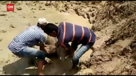VIDEO: Aksi Heroik Penyelamatan Bayi Gajah Di Aceh
