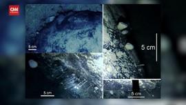 VIDEO: Ahli Temukan Hewan Bisa Hidup di Bawah Es Antartika