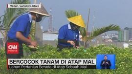 VIDEO: Bercocok Tanam di Atap Mal