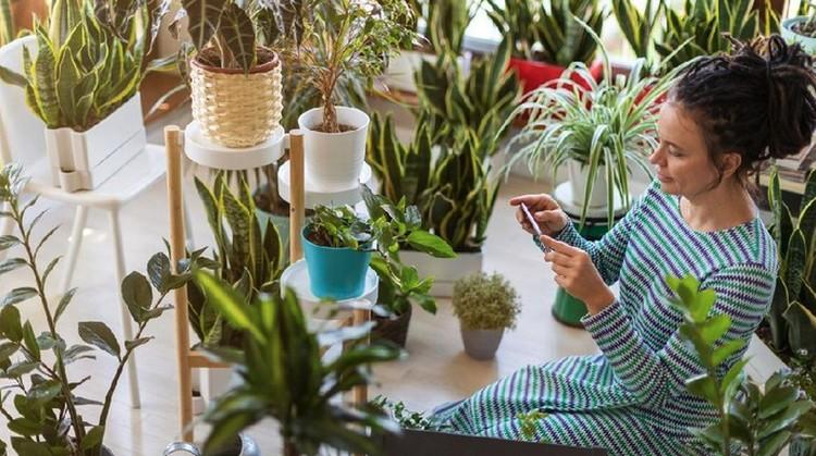 Banyak manfaat mengejutkan yang mungkin tak terduga dari memiliki tanaman hias di rumah. Apa saja manfaat mengejutkan dari tanaman hias itu ya, Bunda?
