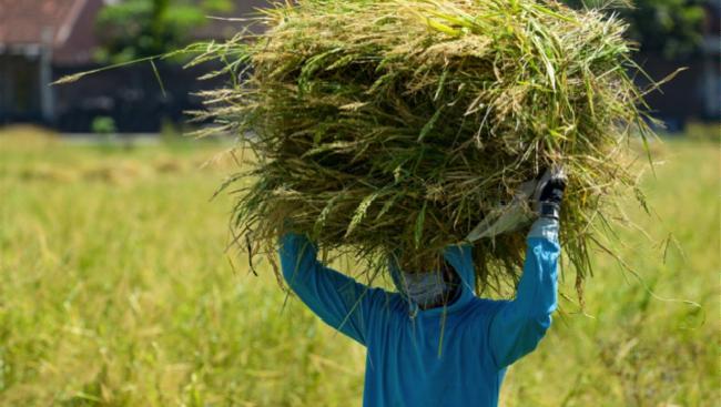 Kepala Biro Humas dan Informasi Publik Kementerian Pertanian Kuntoro Boga mengungkap keseluruhan status ketahanan pangan Indonesia mengalami kenaikan.