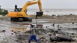 Puluhan Bangkai Paus Pilot Dikubur di Pantai Modung Madura
