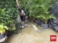 Ikan di Tambak Luber, Warga Pejaten Mancing Lele Saat Banjir