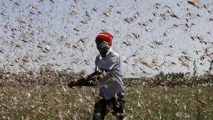 FOTO: Gerombolan Belalang Serang Kenya