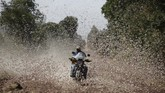 Kenya sedang menghadapi wabah belalang terburuk dalam beberapa dekade terakhir.