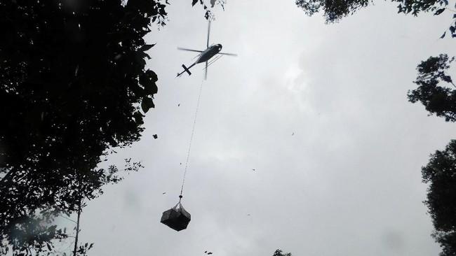 Sebanyak 10 orang utan dilepas ke alam liar di Hutan Lindung Bukit Batikap, Kalteng dan Pusat Rehabilitasi Orang Utan Samboja Lestari, Kaltim.