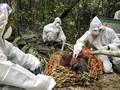 FOTO: Melepas Orang Utan ke Alam Liar Kala Pandemi