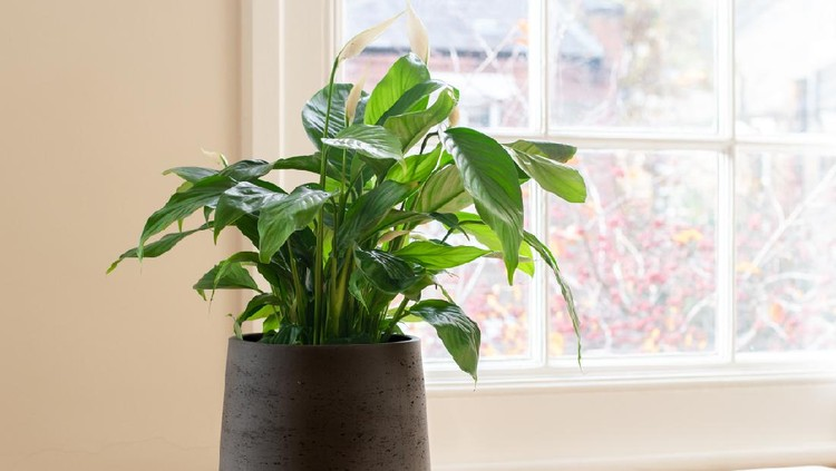 House plant next to a window, in a beautifully designed interior.
