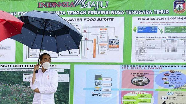 Selain mengecek pompa air di food estate Sumba Tengah, NTT, Jokowi juga ingin menyapa warga yang sudah menunggu sambil hujan-hujanan.