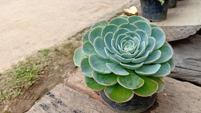 Sejumlah tanaman hias unik bisa jadi pilihan tambahan koleksi untuk mempercantik dekorasi rumah Anda.