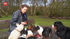 VIDEO: Pasang Surut Layanan Perawatan Anjing karena Covid-19