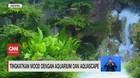 VIDEO: Tingkatkan Mood dengan Aquarium dan Aquascape