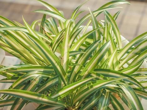 5 Tanaman Hias yang Aman untuk Hewan Peliharaan di Rumah