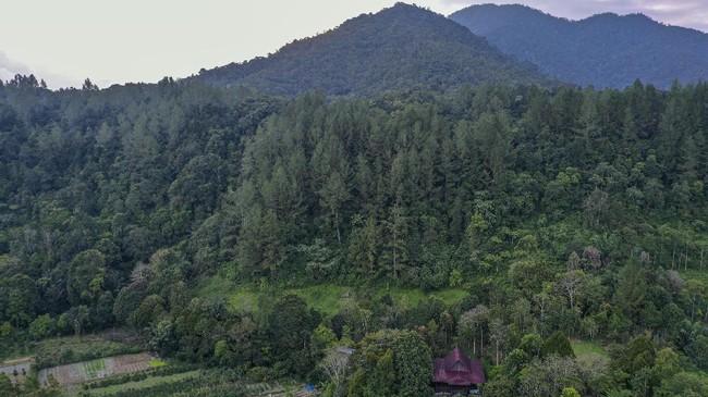 Andaliman dikenal sebagai merica batak dan menjadi salah satu rempah yang memiliki jejak sejarah perjalanan bumbu di nusantara dan dunia.