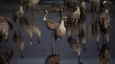 Danau Hula di Israel disinggahi lebih dari 500 juta burung yang bermigrasi dari tempat dingin ke tempat hangat setiap tahunnya.