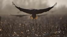 FOTO: Danau di Israel Disinggahi 500 Juta Burung