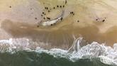 Dalam foto pilihan CNNIndonesia.com pekan ini, ada ikan paus yang terdampar, elang emas pemburu, serta muntahan lahar Gunung Etna.