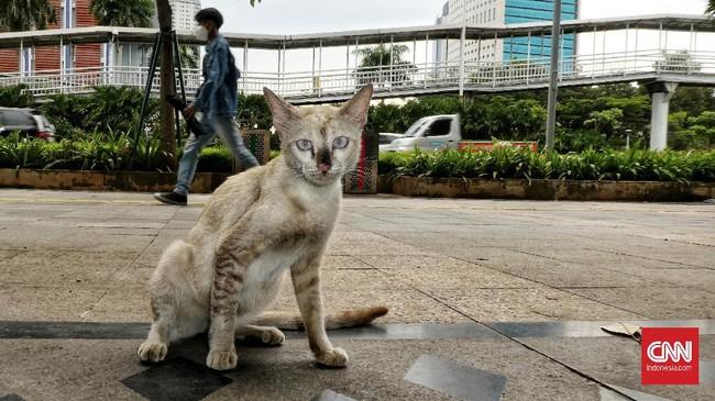 Overpopulasi atau kelebihan anjing dan kucing liar terjadi karena banyak hal, salah satunya pemilik hewan yang enggan mensterilisasi binatangnya.