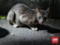 FOTO : Overpopulasi Kucing Tak Bertuan di Ibu Kota
