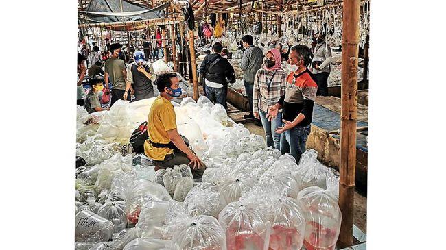 Damo menuturkan kisahnya mendirikan pasar ikan hias yang kini populer di mancanegara, serta kehadiran BRI yang membantu sekitar 380 pedagang.