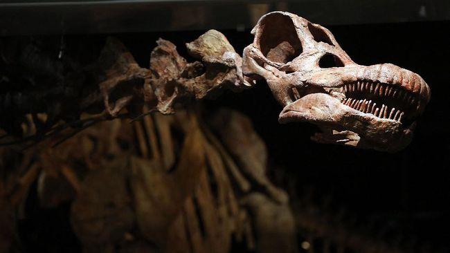 Fosil Dinosaurus Besar Ninjatitan Ditemukan di Arg