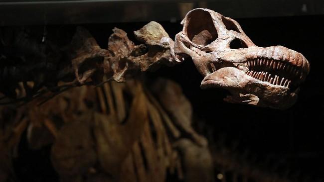 Fosil Dinosaurus Besar Ninjatitan Ditemukan di Argentina